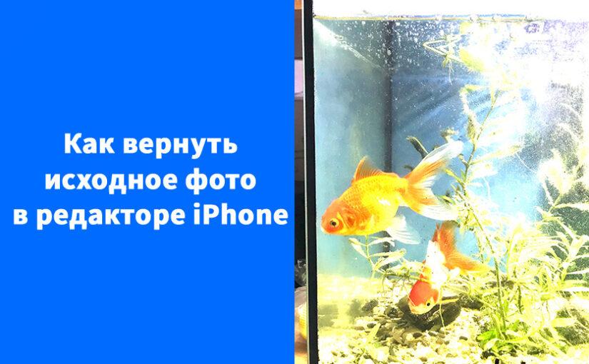 Как вернуть исходное фото в Редактор фото iPhone